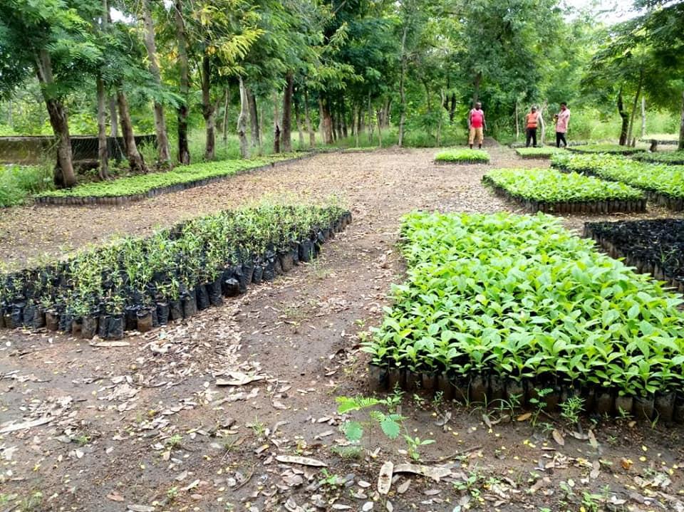 CAVNET Embarks on Afforestation Project